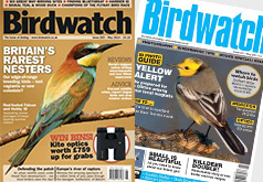 Free Birdwatch Subscription