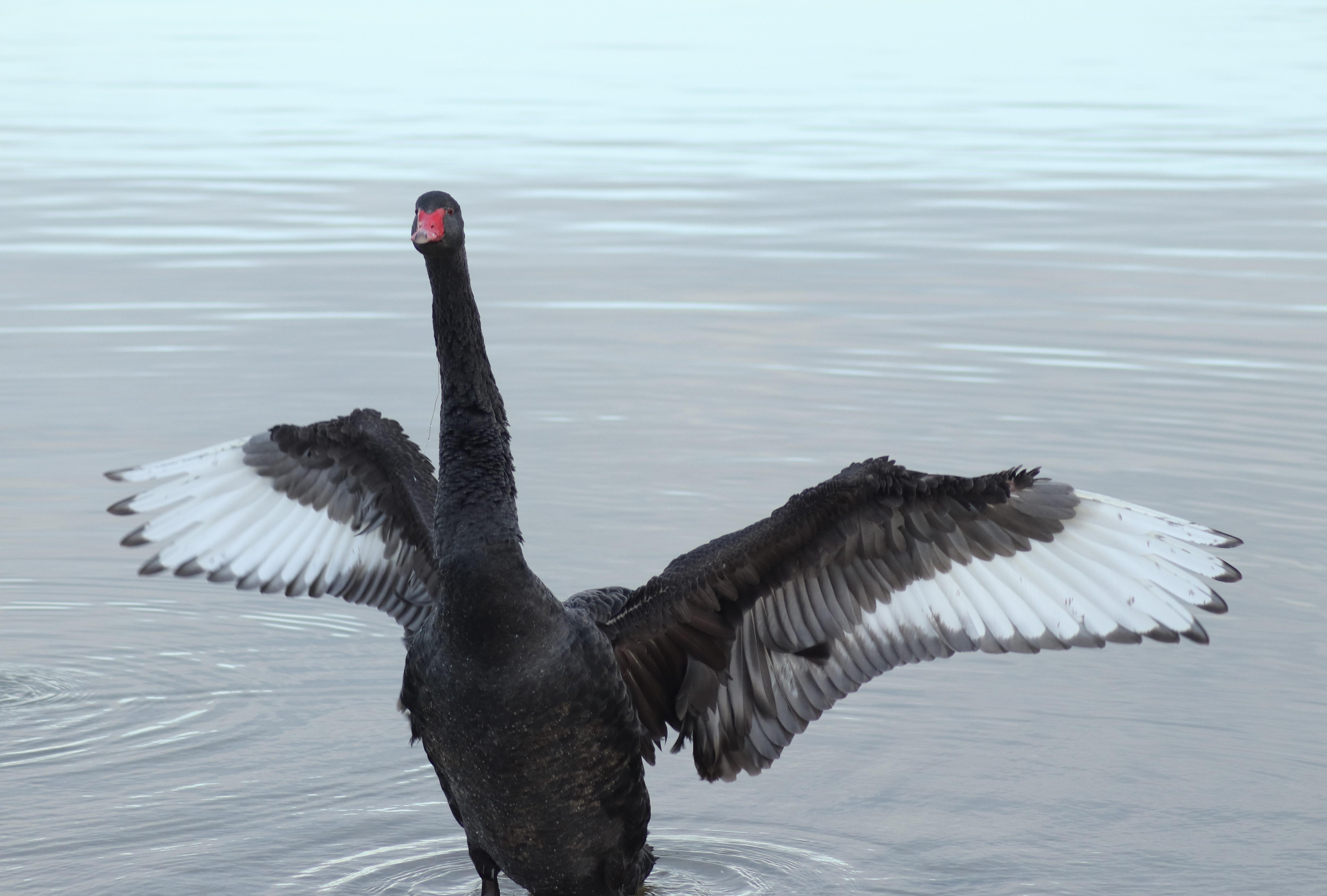 Black Swan Contact Lenses Scenes